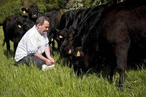 Pat Whelan's Wagyu Herd